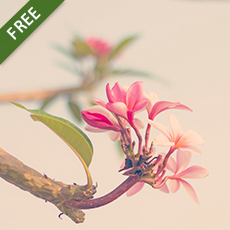 Free Images of the Week