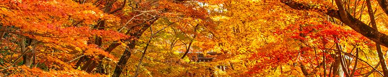 秋の花・自然風景