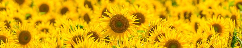 夏の花・自然風景