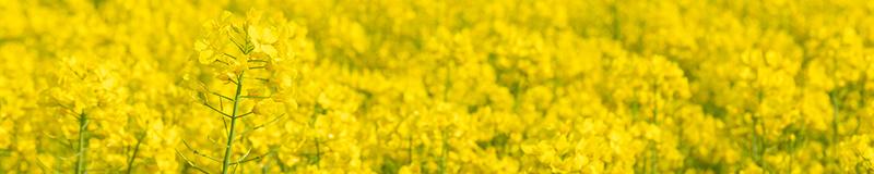 その他の春の花・自然風景
